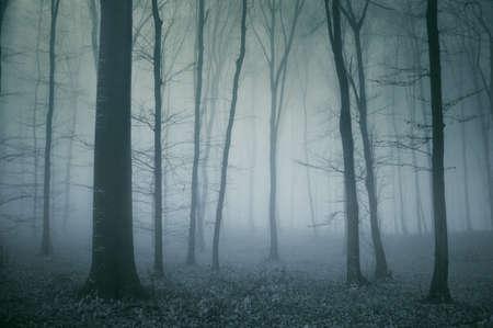 жуткий: жуткий сцены из темного холодного леса в конце осени