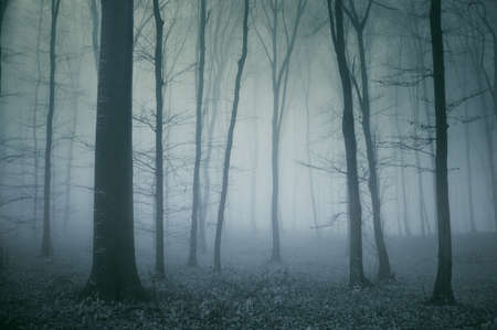 spooky scene from a dark cold forest in late autumn photo