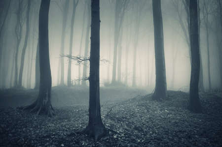 mysterious light in a forest with fog Stock Photo