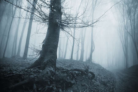 spooky tree in a cold forest with blue fog
