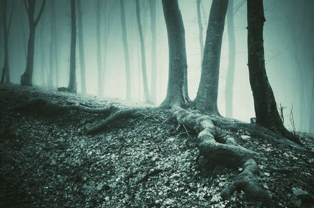 tree and roots on the ground in a dark mysterious forest photo