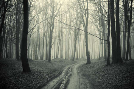 dark forest: path through a forest with black trees and mist