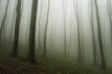rising fog in a forest at dawn photo