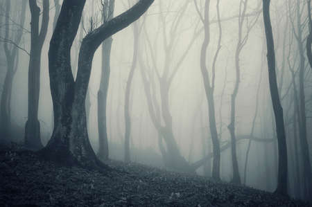 photo of an old tree in a cold forest with fog photo