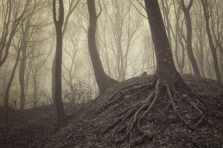 arbres avec des racines visibles dans une forêt brumeuse
