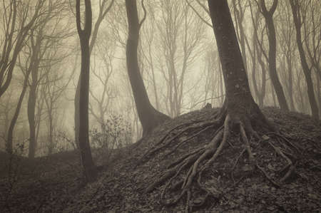 visible: trees with visible roots in a misty forest
