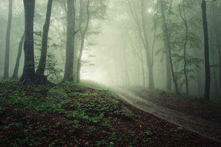 a road through a forest with fog with a green tint