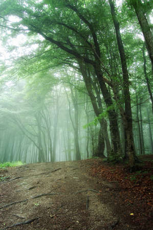 road through a green forest with fog photo