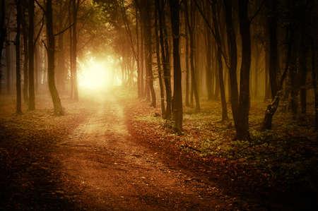 Aufgehende Sonne in einem Wald mit Nebel im Herbst Standard-Bild - 10817992