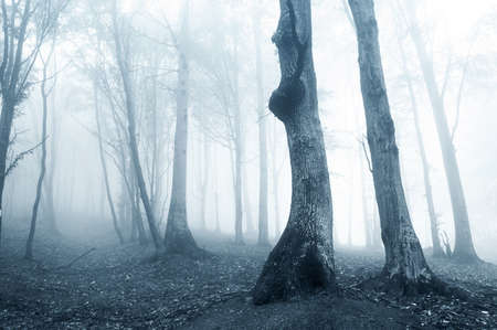 old strange trees in a forest with blue fog in a strange ghostly light