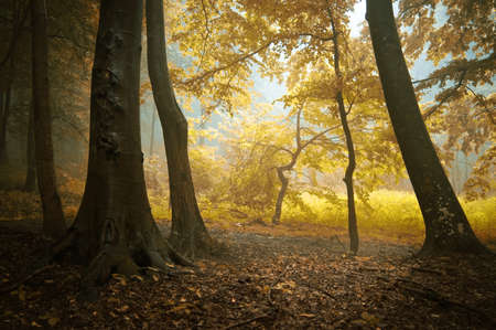 autumn in a colorful forest with orange leafs Stock Photo - 11104525