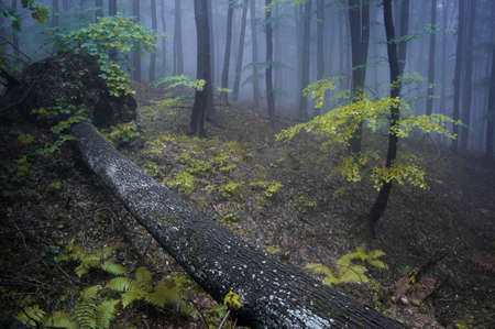 night in a misty forest with purple haze photo