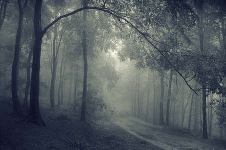 Monochrome photo of a road through a beautiful forest with branches hanging photo