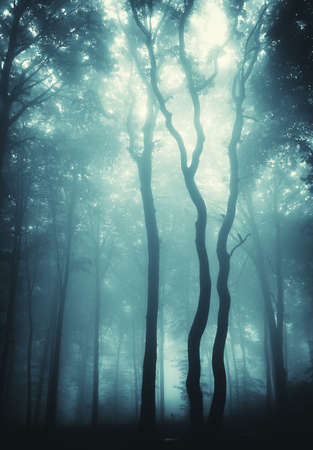 rainy season: vertical photo of mysterious trees in a forest with blue fog  Stock Photo
