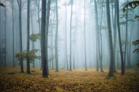 forest with orange leafs and grass and elegant beech trees Stock Photo - 11104516