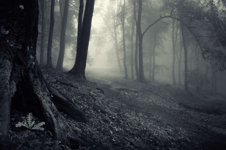 scary night: mysterious looking forest on a misty evening