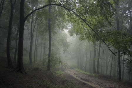 road through a beautiful forest with branches hanging Stock Photo - 11104517