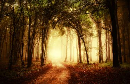 landscape: 通過一個金色的秋季森林道路