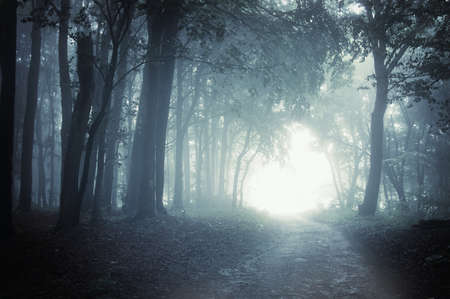 Path to light through a dark cold forest at night  Stock Photo - 11104515