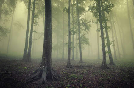 green forest with fog between trees in mysterious light