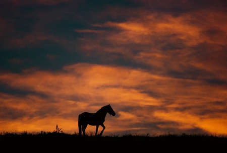 sunset landscape with horse and beautiful fire colors Stock Photo - 11104509