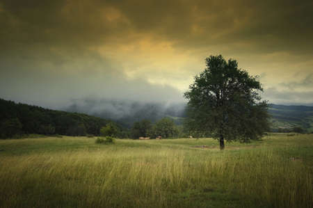 landscape with tree dramatic sky fog and beautiful autumn colors on a meadow photo