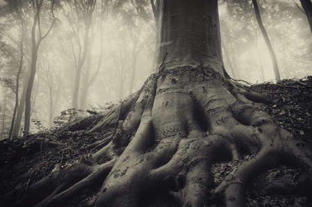 roots of an old tree in a dark misty forest with eerie atmosphere