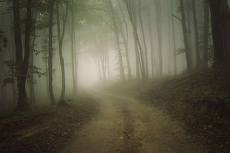 road through a forest with eerie fog at autumn Stock Photo