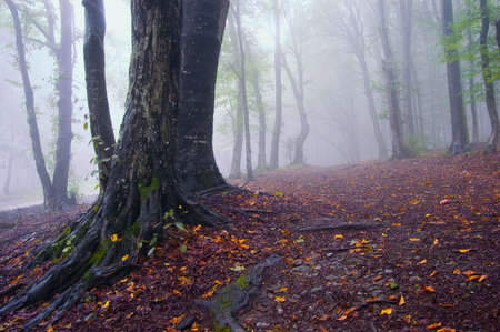 dark jungle green: autumn landscape of a forest with fog and colorful leafs Stock Photo