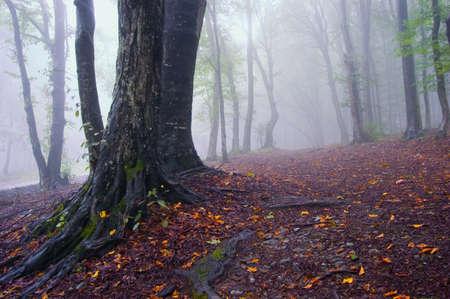 Herbstlandschaft von einem Wald mit Nebel und bunten Blättern