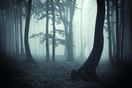 foresta: sagome degli alberi in una foresta misteriosa nebbia blu scuro con