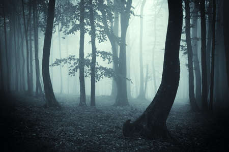 tree silhouettes in a mysterious dark forest with blue fog