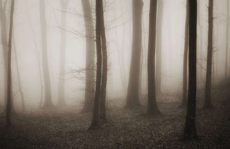 mysterious forest with fog in sepia