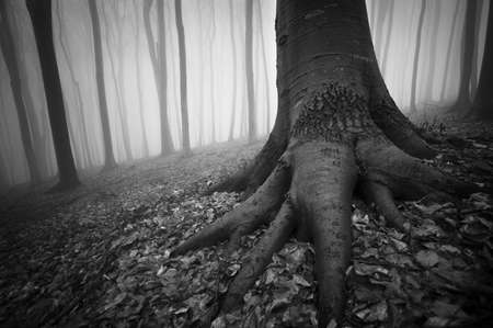scary forest: black and white photo of a tree in a dark forest