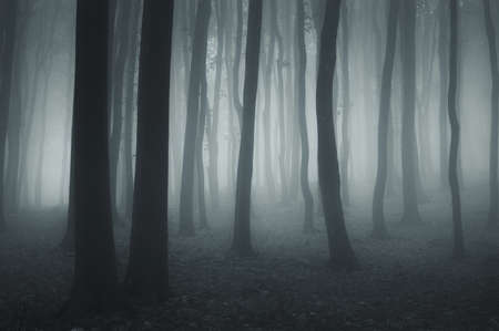 dark forest with fog and cold light photo