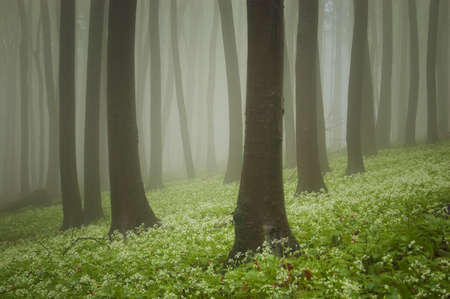 fog white: green forest with flowers on the ground