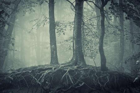 arbol raices: árboles con las raíces de miedo en un bosque oscuro Foto de archivo
