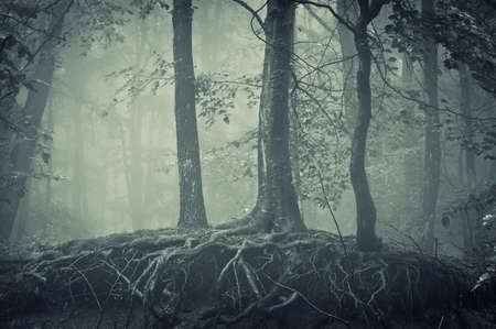 mystical forest: scary trees with roots in a dark forest