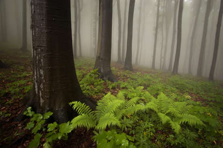 forest with fern on the ground in summer photo