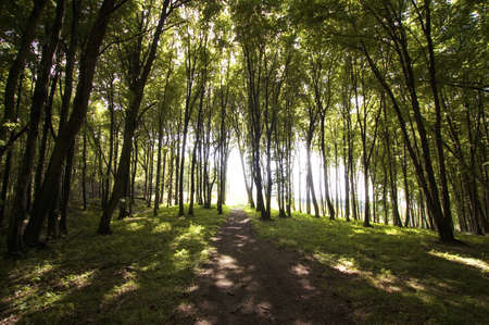 sun spots in a green forest in summer Stock Photo - 11925869