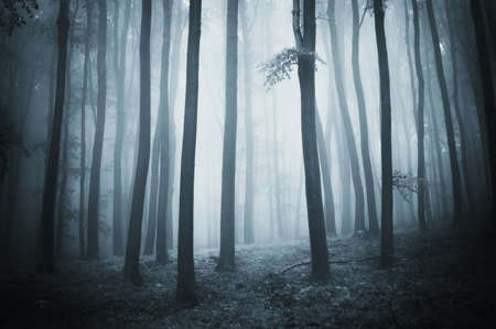 forest with elegant trees and fog photo