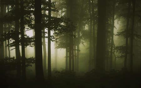 foresta: gli alberi ai margini del bosco in una giornata estiva di pioggia Archivio Fotografico