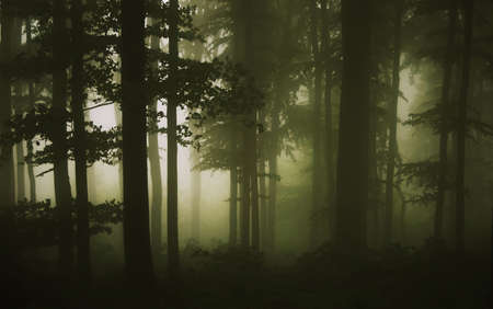 mystery woods: trees at the edge of the forest on a rainy summer day Stock Photo