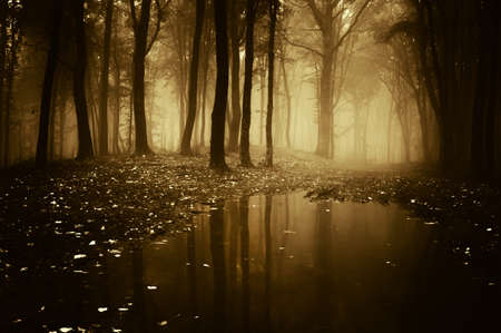 dark forest: forest with pond in autumn Stock Photo