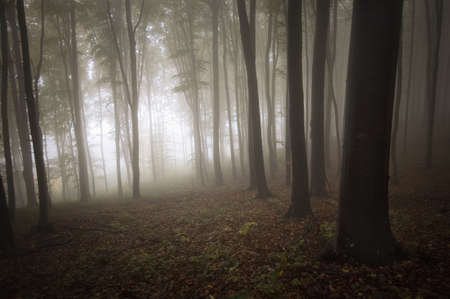 light entering a mysterious forest with fog photo