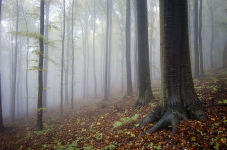 forest with wet trees and mist after rain photo