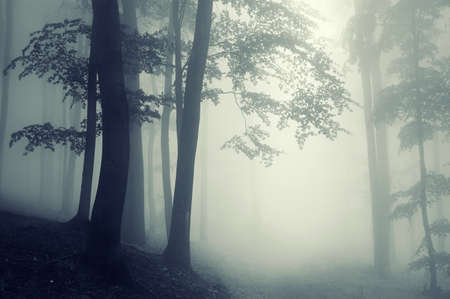 trees in counter light in a dark forest with fog