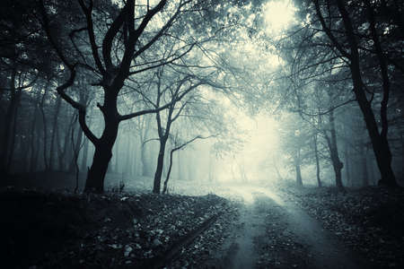 misty forest: path through a dark mysterious forest  Stock Photo