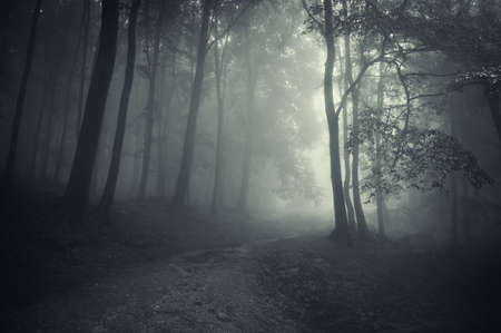 darkness: sun beam in a beautiful forest Stock Photo