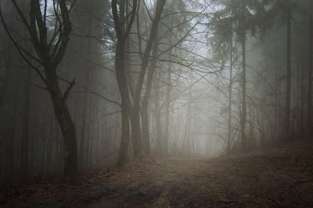 path towards light in a dark forest  Stock Photo